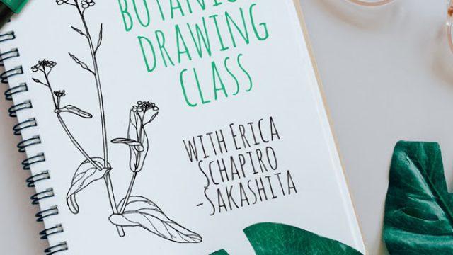 Erica Schapiro Sakashita