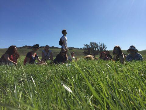 Field Trip Grass